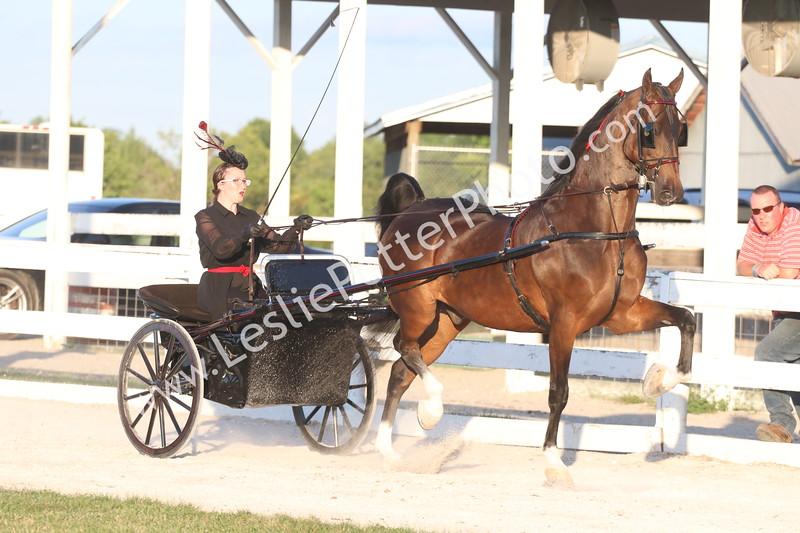 Class 11: American Saddlebred Pleasure Driving