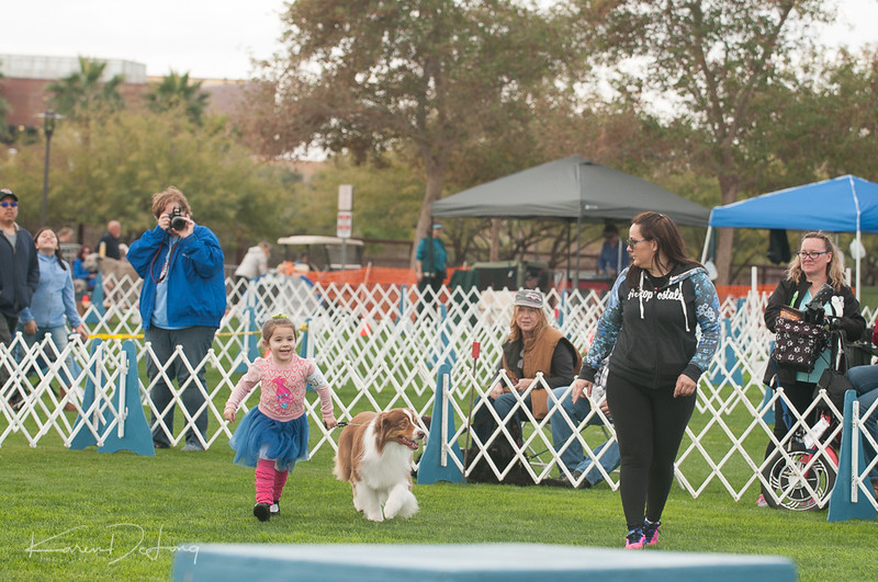 20170114_Kachina Kennel Club_Aussies-10.jpg