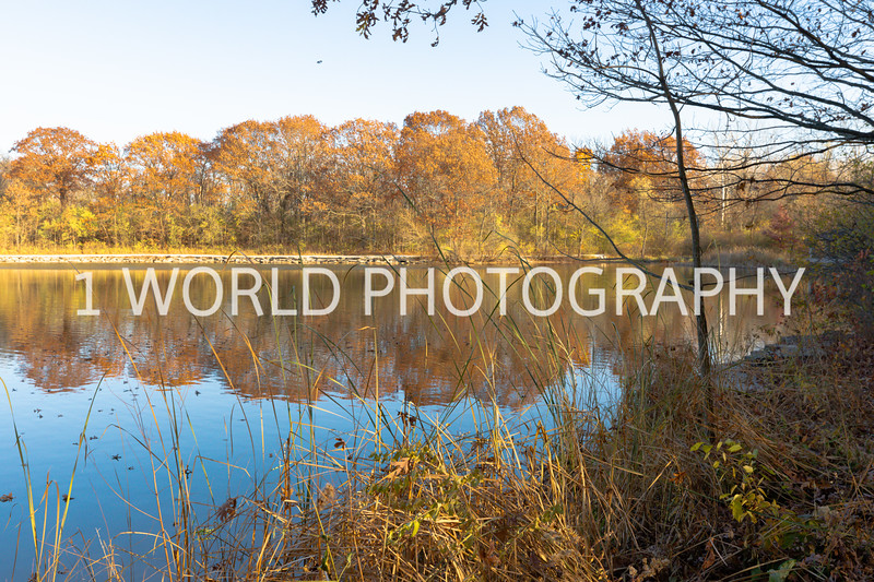 202011052020_11_5 Herrick Lake FP (last few from front of Morton Arberetum)118--1.jpg
