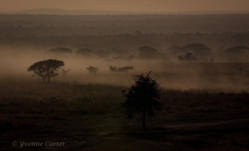 Serengeti Plain Africa.jpg
