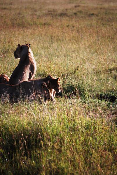 Serengeti (107).JPG