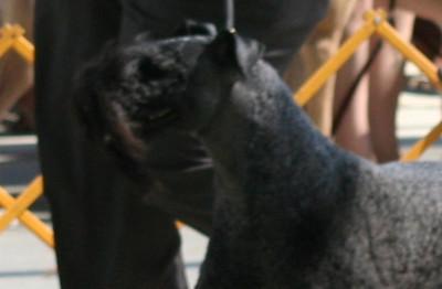 Richmond Dog Fanciers 8 06