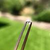 1.83ctw Antique French Cut Diamond Parcel 4