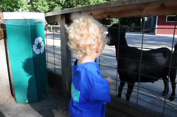 Everett fell of a picnic bench and hit his head at a picnic at the zoo. Now he is trying to get the goat to kiss his head.