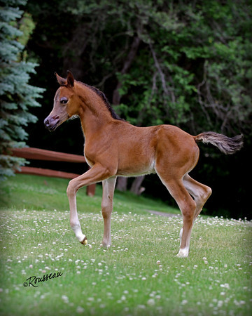 MM Foal - David Ross