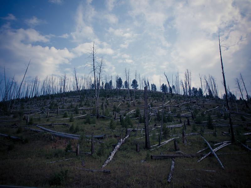 yellowstone fire landscape.jpg