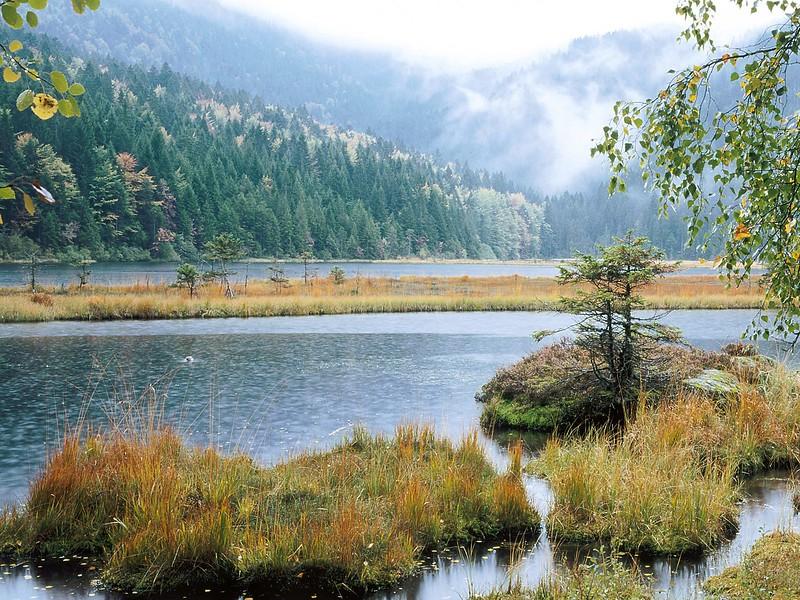 Nature41.jpg