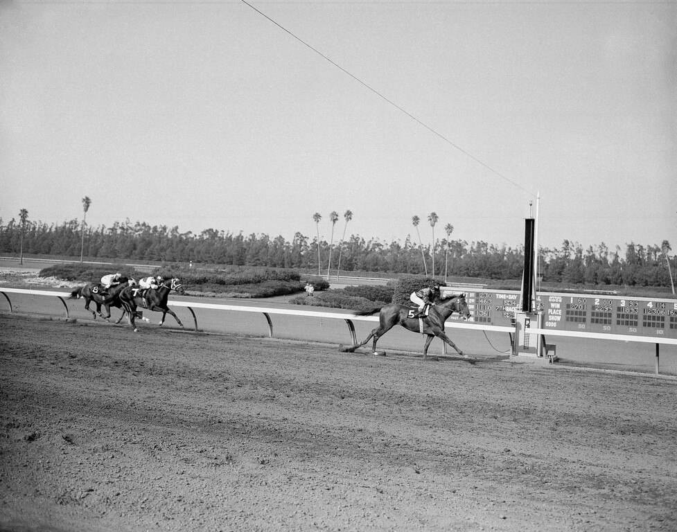 . The incomparable Swaps (5) and Blue Volt (8) to win the $110,500 Sunset Handicap at Hollywood Park in Inglewood, California  July 25, 1956. Swaps led from wire to wire to break another world record by running the mile and five-eights in 2.38 1/5 against the old record of 2.39 4/5. Ridden by Willie Shoemaker, Swaps paid $2.20 to win with no place or show bets taken. Swaps leading the field the first time around. First time around and finish sent as combo. (AP Photo/Harold P. Matosina)