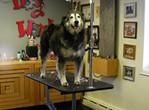 Silver Big Dog, 4-Lead Bolt-On Arm.jpg