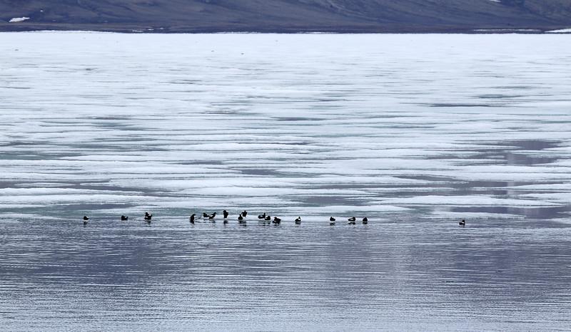 Svalbard_0134.jpg
