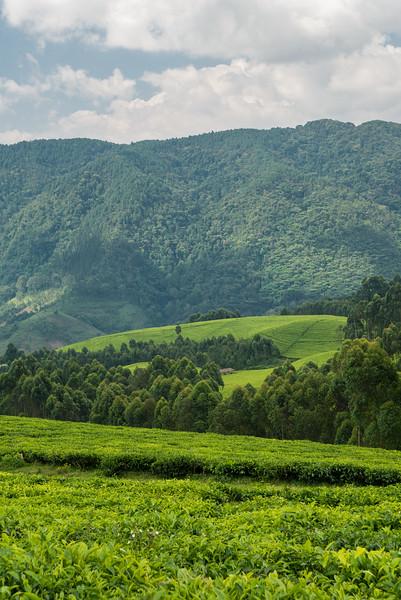 Nyugwe-Rwanda-54.jpg