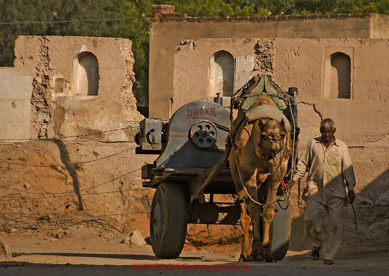 India2010-0204A-401A.jpg