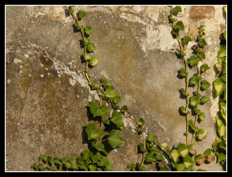2006-09 Villa di Rusciano 047.jpg