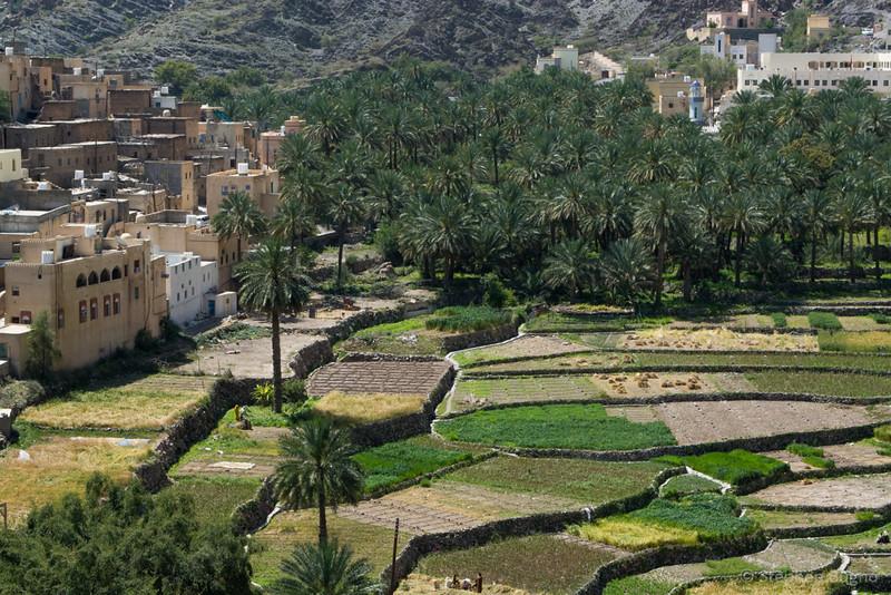 Jebel Akhdar-0312.jpg