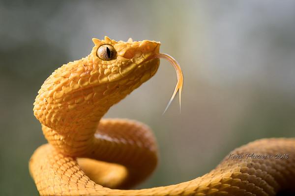 Costa Rica Frogs, Mammals, Reptiles