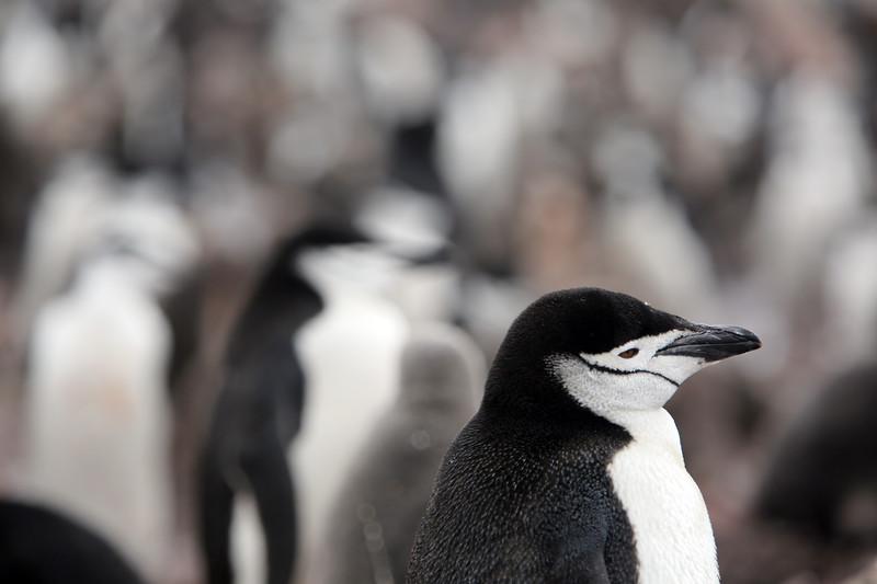 Antarctica_41.JPG