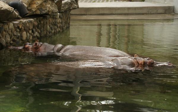 philadelphia zoo 8 23 12