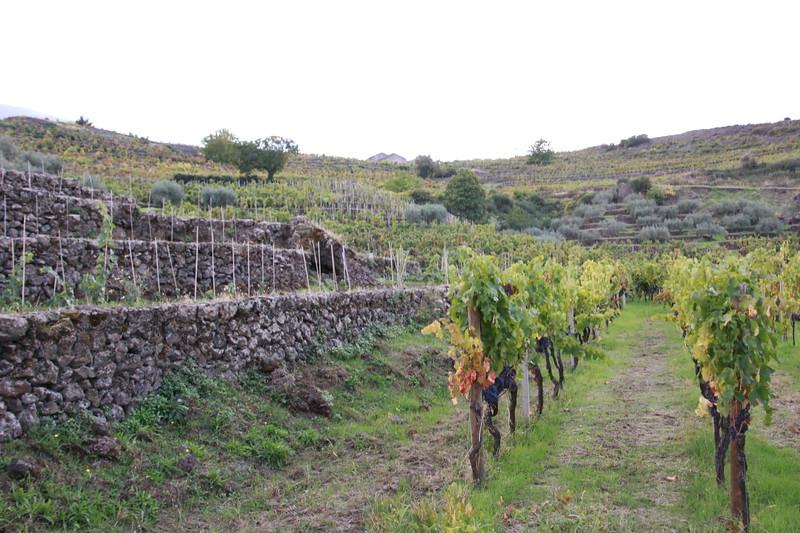 Terre Nere Vineyards, Etna district