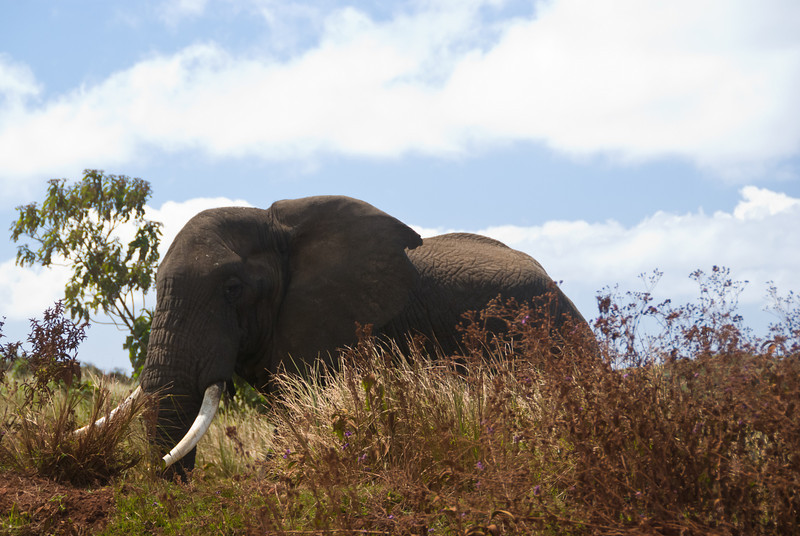 This elephant almost charged us