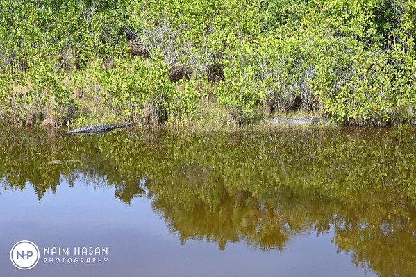 Merritt Island Nat Wildlife Refuge _Orlando Florida