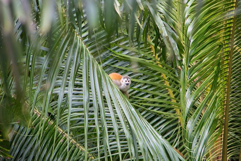 wildlife-4-Portfolio-48.jpg