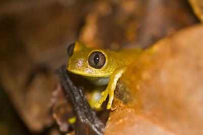 African Amphibians & Reptiles