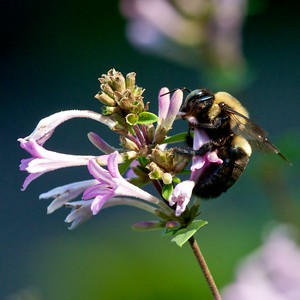 Close up Bees