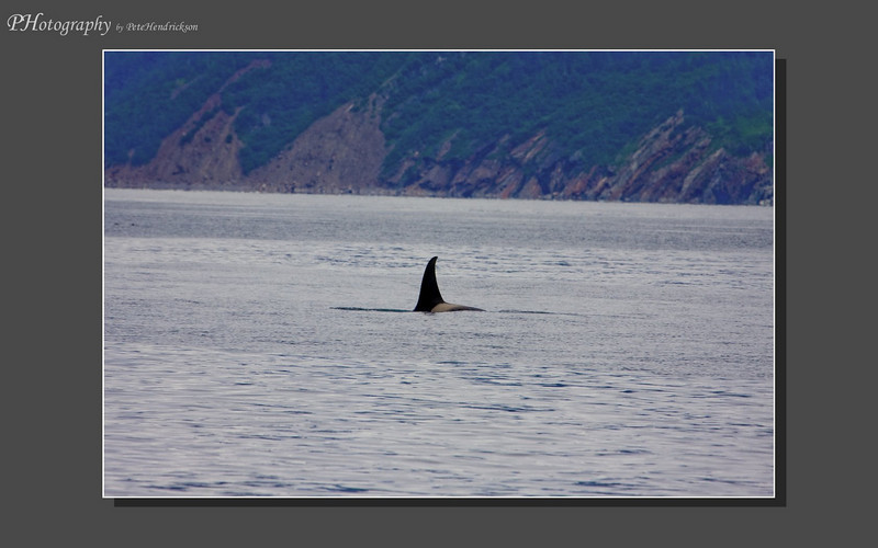 My Alaska 12-08-116.jpg