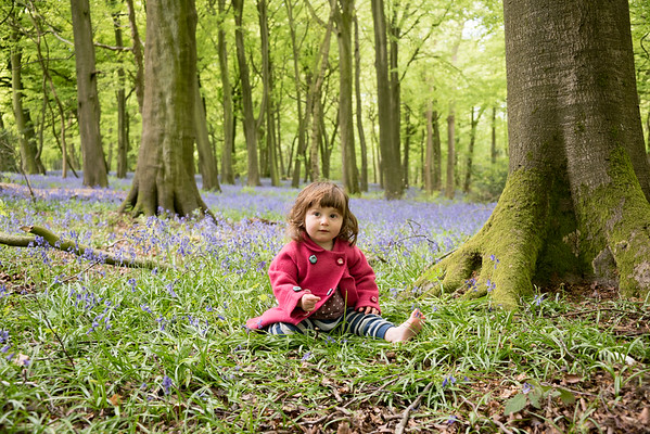 Baby Portraits - India in the bluebells