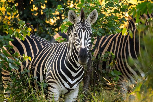 Kruger National Park - First Trip