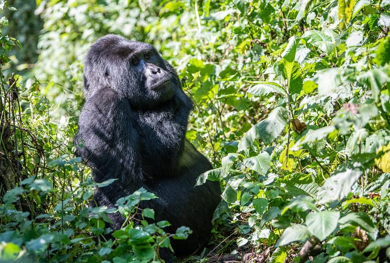 Uganda_T_Gor-764.jpg
