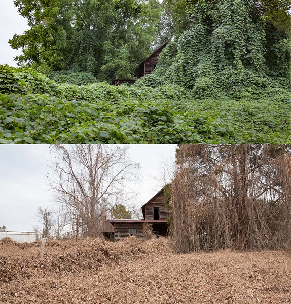 House in Lumpkin County in summer and winter.