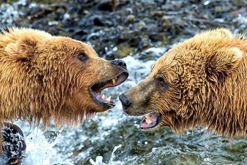 Alaska_2013_FH0T8790.jpg