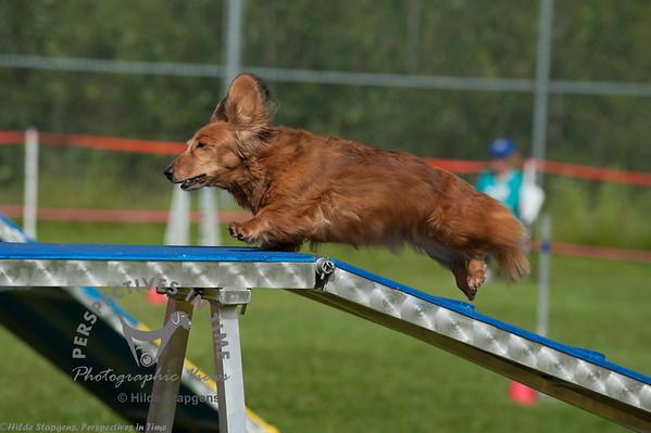 2014  AKC agility August 9th.