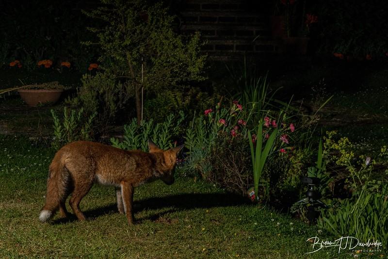 Garden Night Shoot-7272.jpg