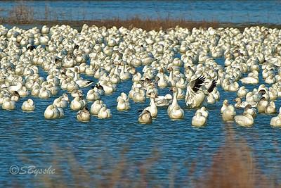 Blackwater WLR, Maryland