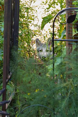 L Wynn Wolf-Hound