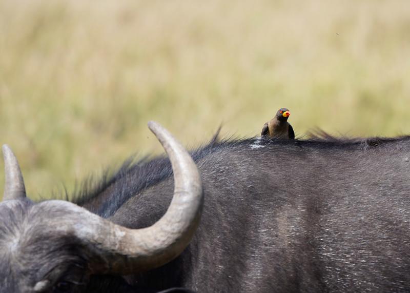 safari-2018-57.jpg
