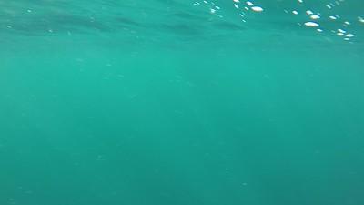 August 6th 2020 Tuna Fishing