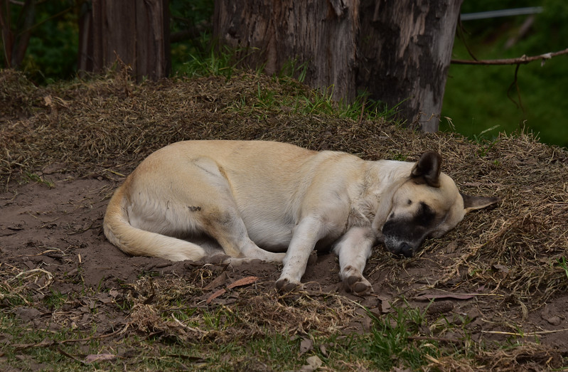 ECQ_0198-Lazy Dog.jpg