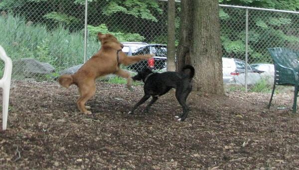 PICS JUNE 17::CODY (new pup)