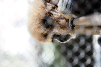 2016 Santa Ana Zoo