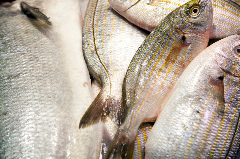 Strepie Fish (Sarpa Salpa), Boqueria market, town of Barcelona, autonomous commnunity of Catalonia, northeastern Spain