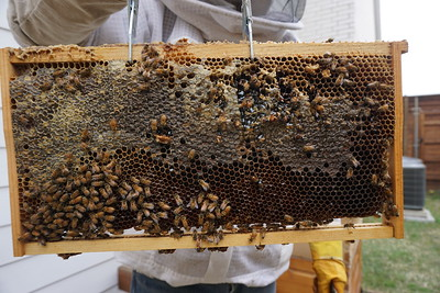 swarm inspection 2