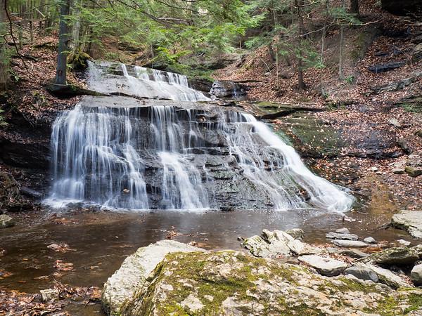Woods of Western Pennsylvania