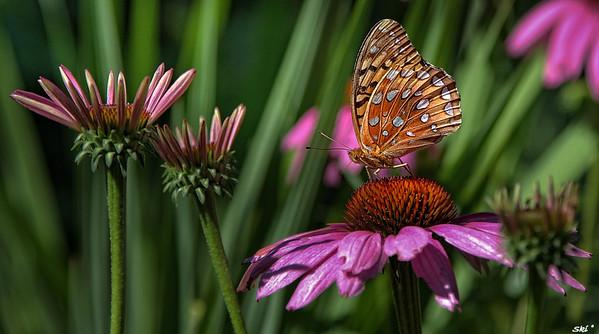 2014 - Butterflies