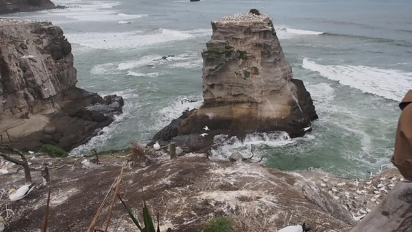 New Zealand Videos