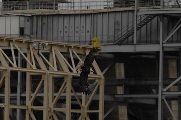 Eagles Nov 4 2009 Conowingo Dam