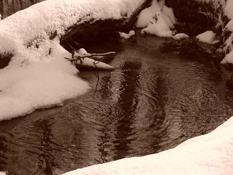 snow 120905 008.jpg