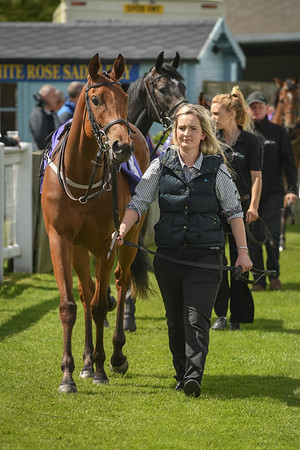 The British Stallion Studs Leisure Furnishings EBF Maiden Stakes (Div II)